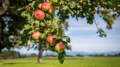 Tagblatt-Quiz – Runde 4: Wie viele Apfelbäume gibt's im Thurgau? Heute geht es um Schätzfragen rund um die Ostschweiz