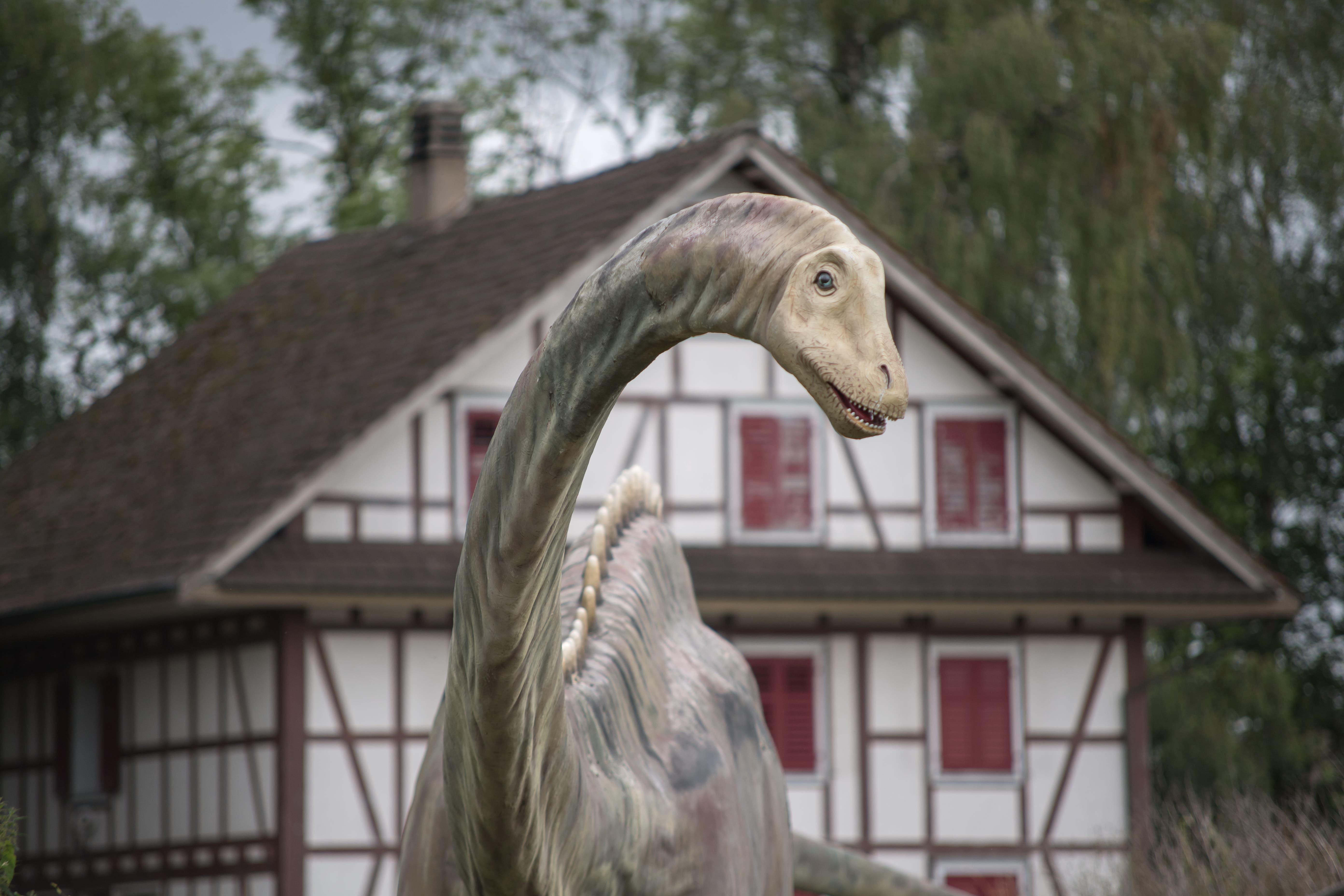Seit Mitte Juni gastiert die Dino-Ausstellung in Geuensee.