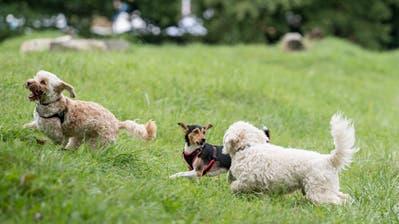 Hunde nicht an der Leine: Jetzt patrouilliert auch die Polizei auf der Luzerner Allmend