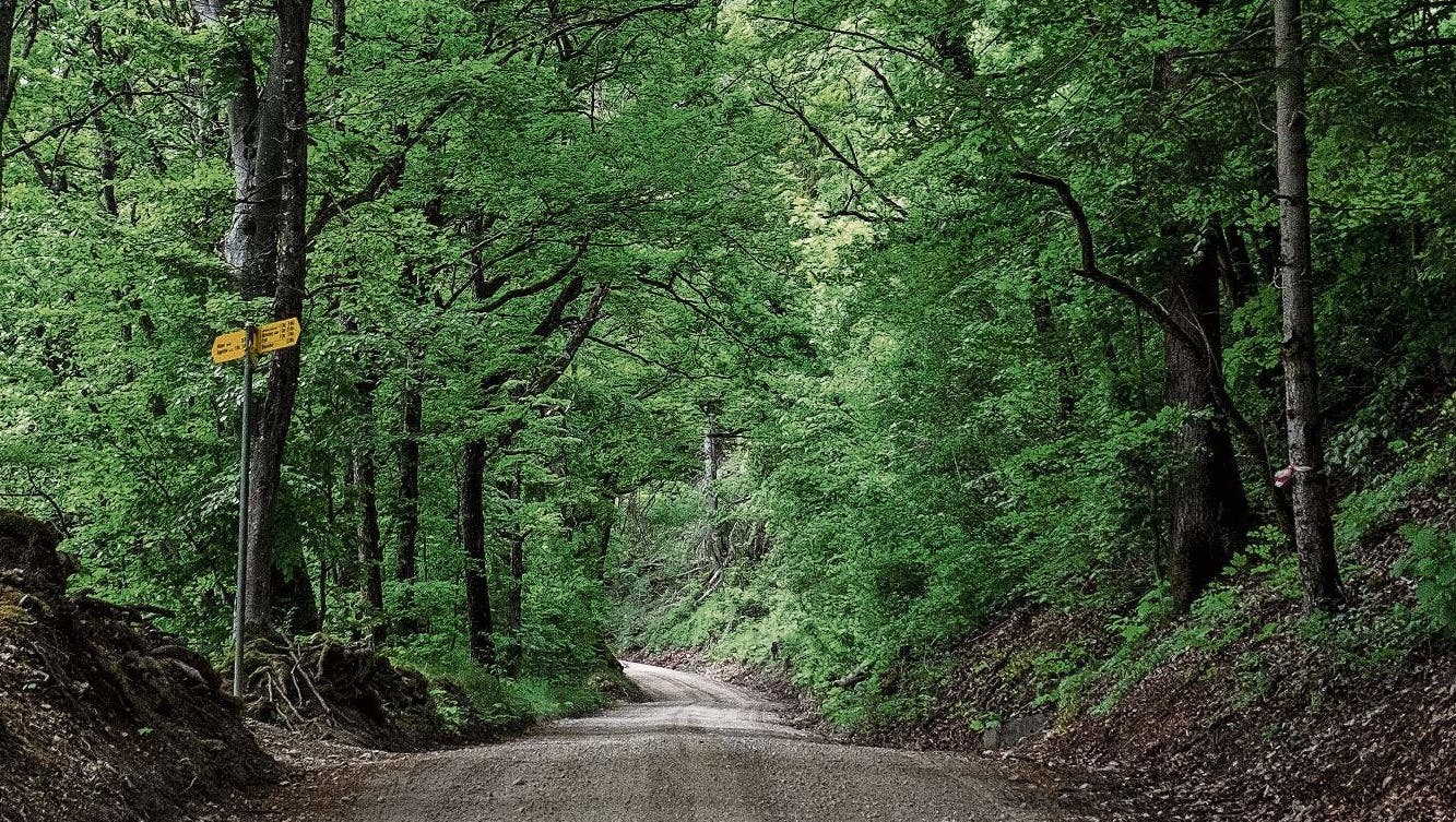 Der Wald ist menschgemacht. (Bild: Sandra Ardizzone)