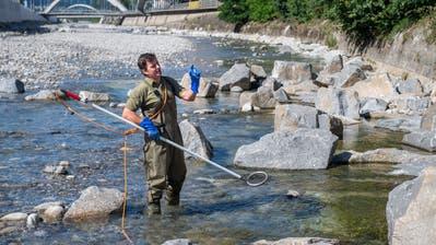Thomas Küng, kantonaler Fischereiaufseher, betäubt mit Strom einige Fische in der Kleinen Emme. Damit will er zeigen, welche neuen Arten sich dank der Massnahmen nun in diesen Flussabschnitt wagen. (Bild: Boris Bürgisser (Emmen, 8. Juli 2020))