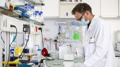 Marcel Walser, Teamleiter Covid-Projekt, bei der Anzucht einer Bakterienkultur im Labor von Molecular Partners , aufgenommen am Dienstag, 11. August 2020, in Schlieren. (Alexandra Wey / KEYSTONE)