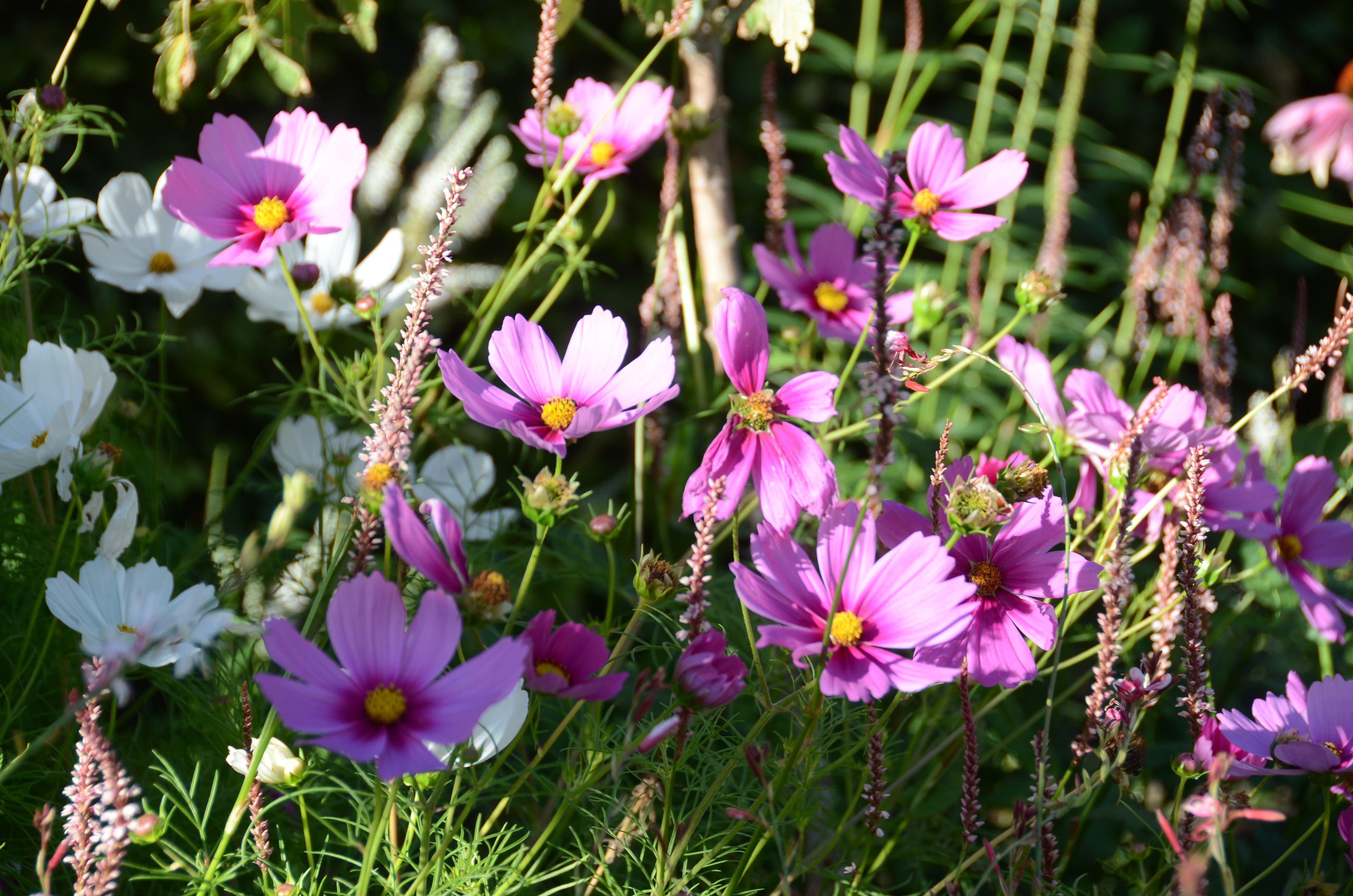 Vielerlei Blumen gibt es zu entdecken.