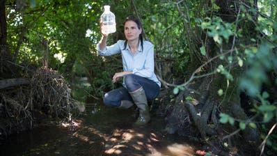 Bedenkliche Wasserqualität: Gewässerschutzchefin Vera Leib nimmt eine Probe am Albertswilerbach in Gossau. (Bild: Benjamin Manser)