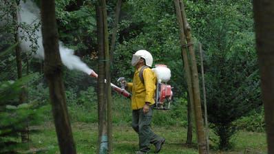 Ein Obstbauer beim Versuchen mit Loeschkalk gegen den Feuerbrand vorzugehen. (Bild: Nana Do Carmo / 22. August 2008)