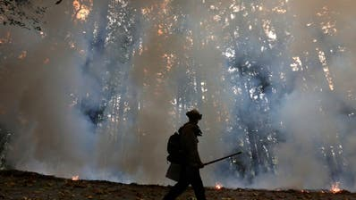 Waldbrände in Kalifornien weiter eingedämmt - Helfer erschöpft