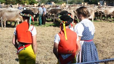 Viehschauen, wie hier in Brunnadern, werden aufgrund des Coronavirus zu einem anderen Erlebnis. (Bild: Urs M. Hemm)