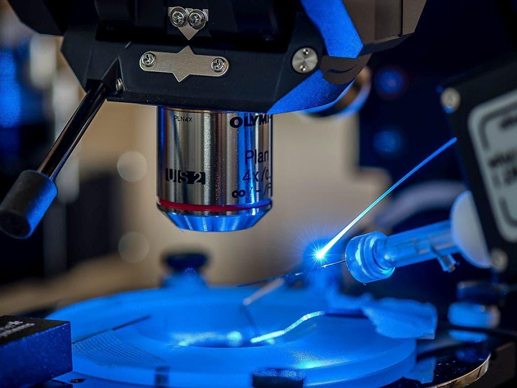 Mit Hilfe einer Technik namens Optogenetik kann die Aktivität von Zellen im Gehirn gezielt mit Lichtimpulsen unterdrückt werden. An der Uni Bern wurde so der REM-Schlaf von Mäusen verhindert. Die Tiere verloren darauf den Appetit. (Pressebild)