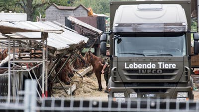 Das Militär sichert die Pferde vom Hof von Ulrich K. in Hefenhofen. (Ennio Leanza / KEYSTONE, 8. August 2017)