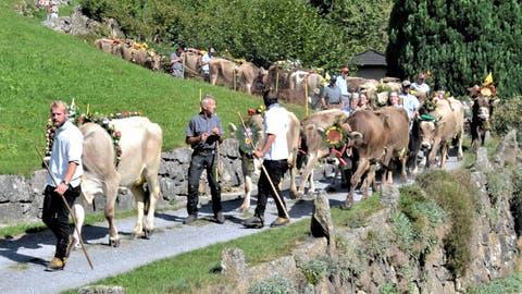 Mit Kuhhirt Benno Nauer an der Spitze nähert sich der Meientaler Alpabzug dem Dorf Wassen. (Bild Georg Epp (12.Sept. 2020))
