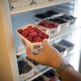 Bei Langfingern sind vor allem Früchte wie Himbeeren oder Kirschen beliebt. (Benjamin Manser (30. Juli 2019, Engelburg))