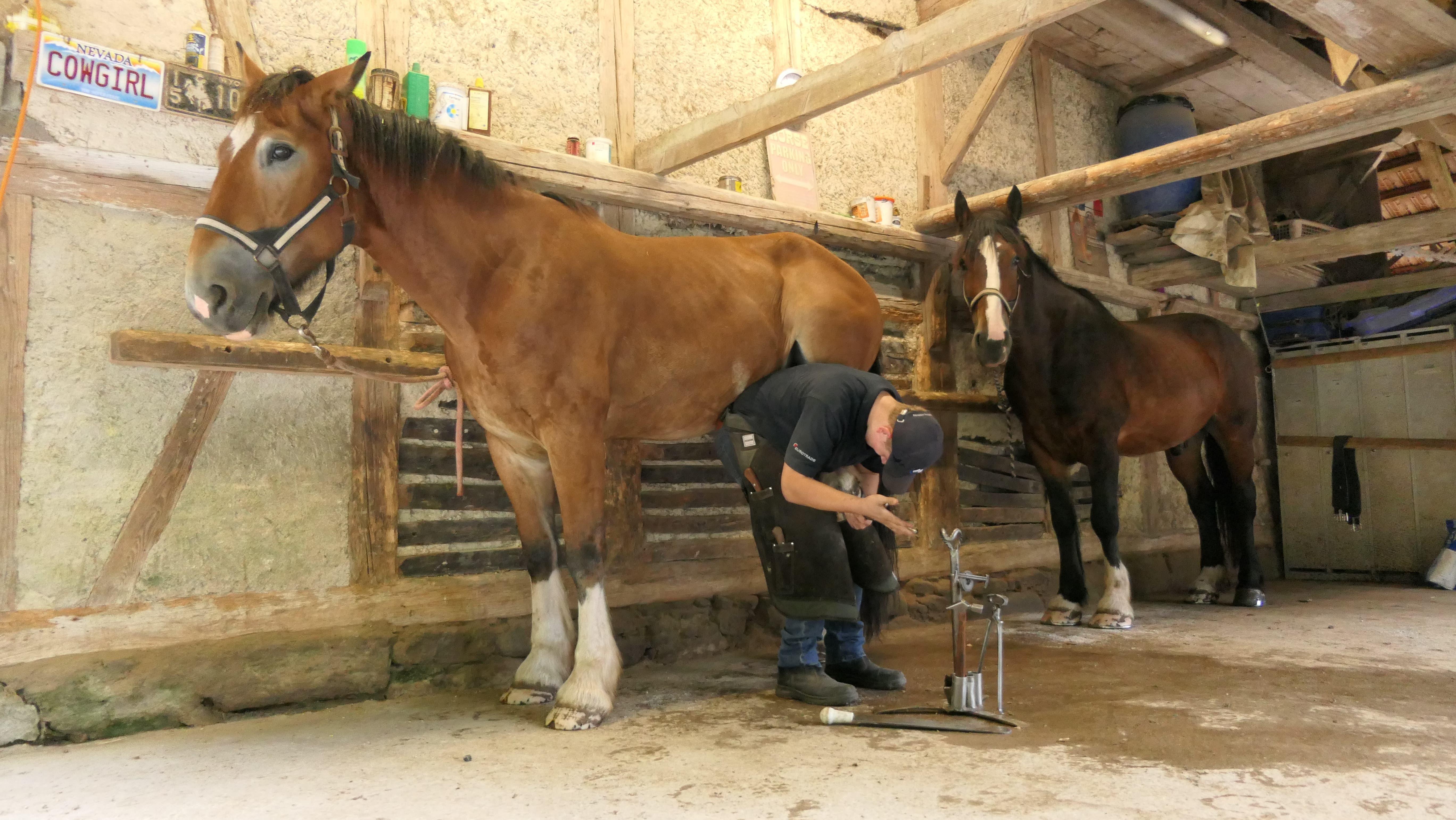 Erik Scheurer aus Engelberg arbeitet als Hufschmied bei der «To Be Ranch» in Langnau bei Reiden und hat bei den «Swiss Skills» teilgenommen.
