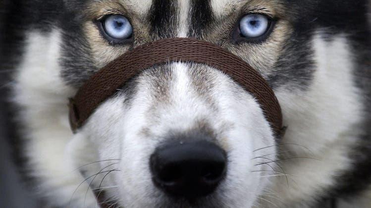 Weshalb manche Hunde aggressiv sind