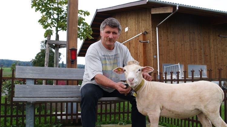 Bauer Strebel zeigt sich an wegen Schafkrankheit