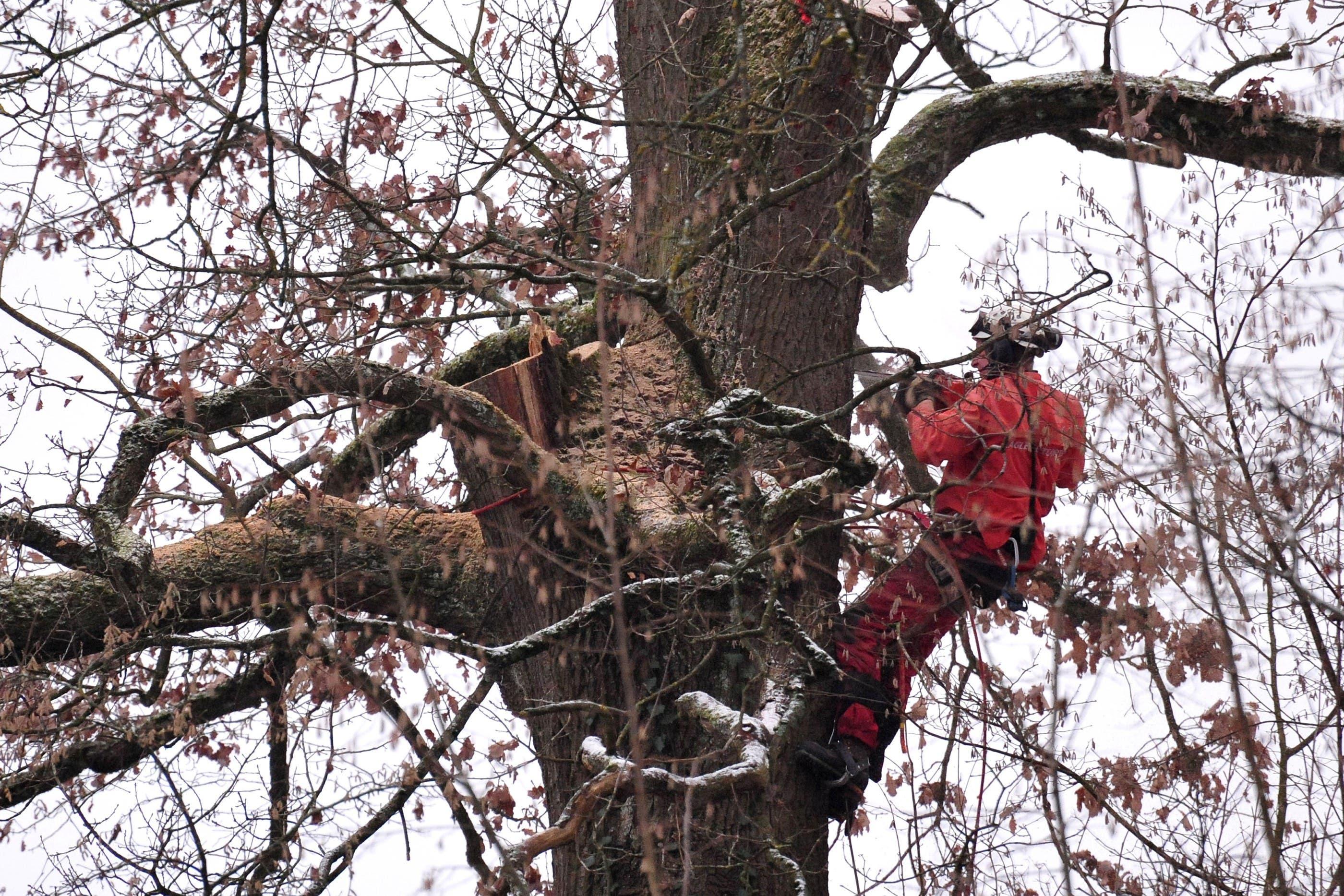 Bäume per Helikopter fällen