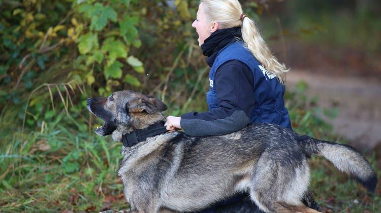 Bösewichte müssen sich in Acht nehmen: Solothurner Polizeihunde sind in Form