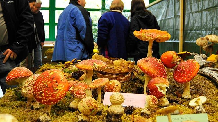 Überall hets Pilzli dra: Fest zu Ehren der Waldfrüchte