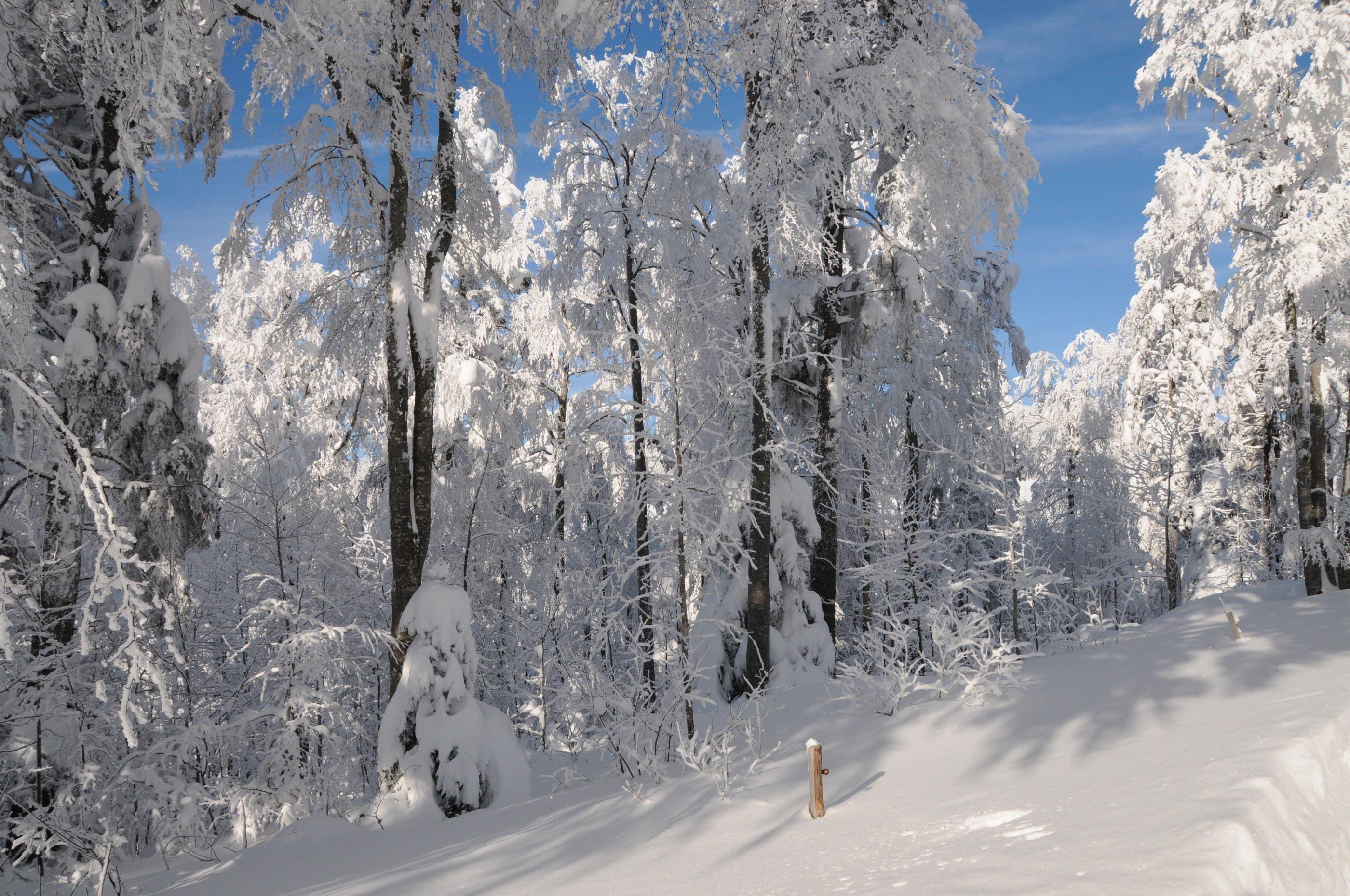 Wunderweisse Winterlandschaft
