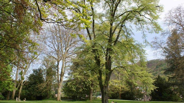 Im Kurpark findet man die schönsten Bäume