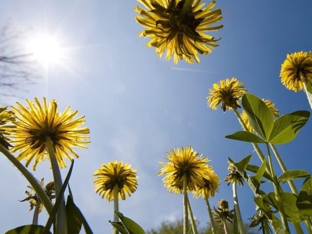 Der Frühling kommt: Gartenarbeit