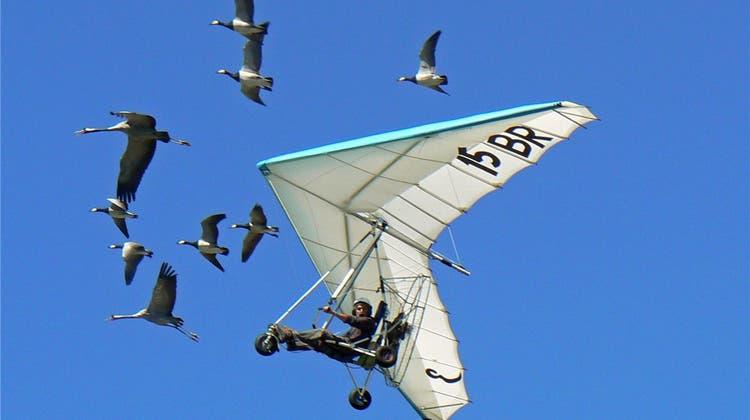 Flugspektakel: Der tollkühne Mann mit seinen fliegenden Gänsen beehrt das Laufental