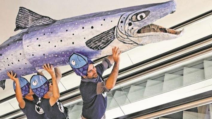 Dank Fischtreppen und Rheintaxi: 2020 ist für Lachse Weg nach Basel frei