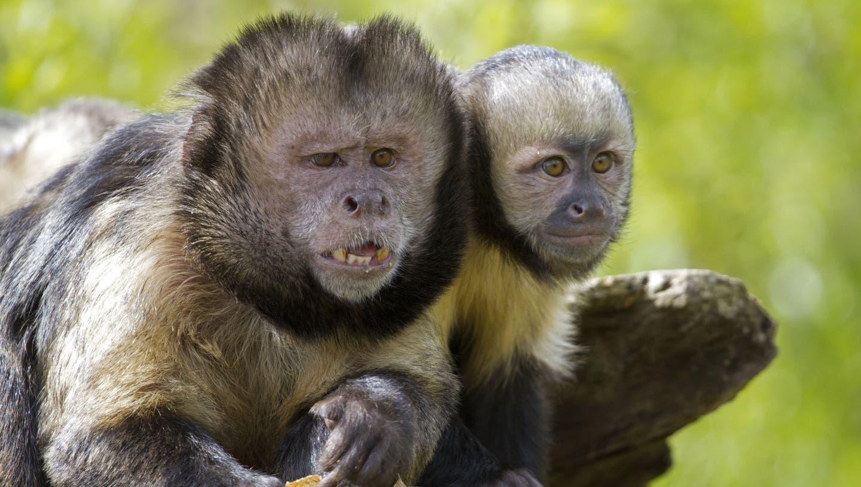 Zoo Zürich: 1,8 Millionen Besucher und 1 verschwundener Affe