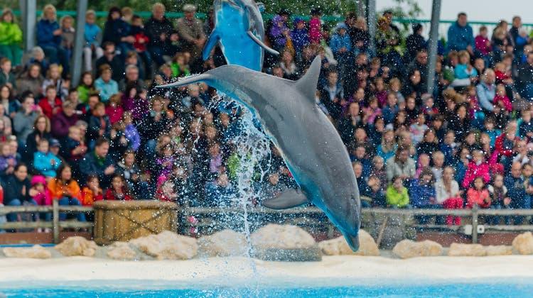 Unglaublich: Im Connyland stirbt erneut ein Delphin – es ist bereits der dritte