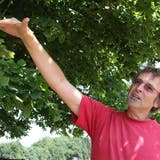 Die geschichtsträchtige Linner Linde kämpft mit Pilzen
