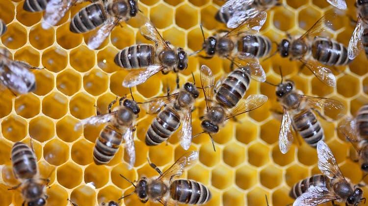 Dr. Andreas Müller: Biene ist nicht gleich Honigbiene