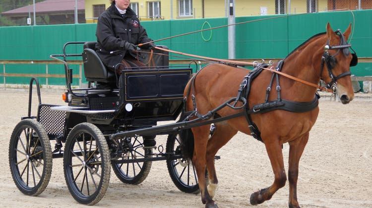 Ein grosser Tag in Balsthal für die jungen Freibergerpferde