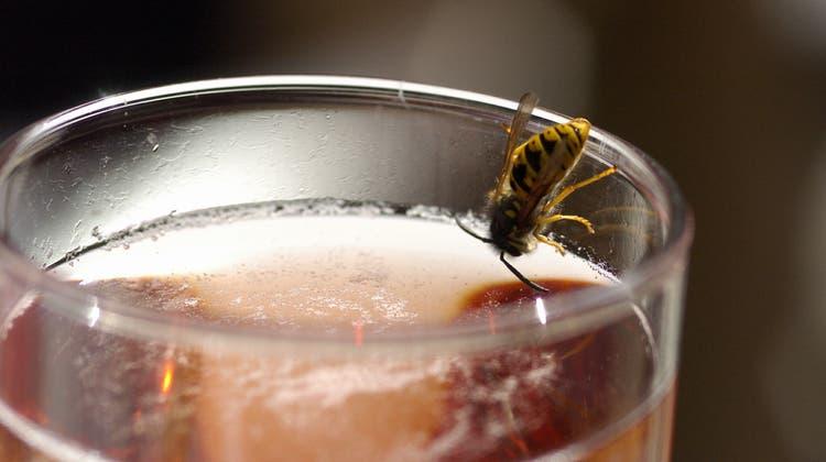 Take-Away-Food ist «ein leicht gefundenes Fressen für die Wespen»