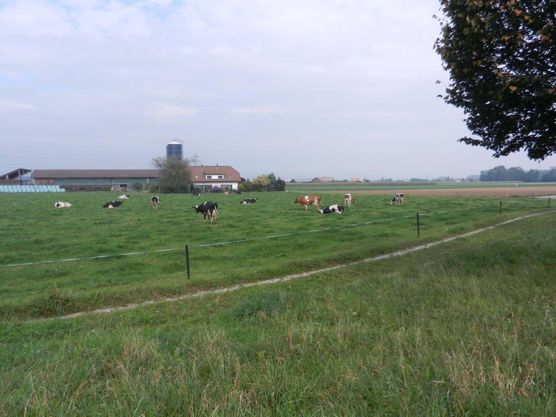 Sieben Landwirtschaftsbetriebe sind ausgesiedelt