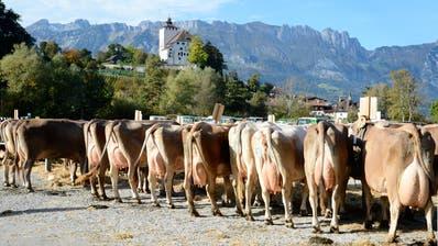 Die Auflagen zum Schutz vor Infektionen mit Covid-19 machen es unmöglich die Viehschau in Nesslau so umzusetzen, dass es ein geselliger Anlass ist. (Hansruedi Rohrer)