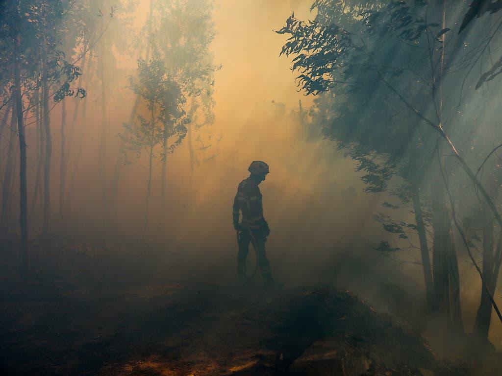 Bei Waldbränden in Portugal ist ein Feuerwehrmann ums Leben gekommen. Im laufenden Jahr sind damit bereits fünf Feuerwehrleute durch Brände getötet worden.