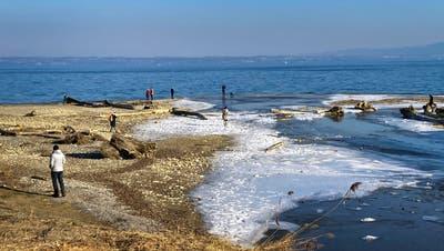 Gefrorene Seeuferstellen in Horn: In der Ostschweiz warten derzeit schöne, aber kalte Wintertage auf uns. (Ralph Ribi)