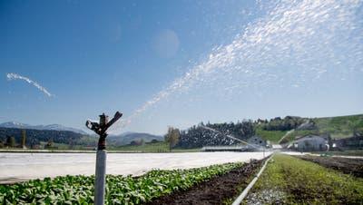 Das Gemüse der Gebrüder Blaser in Ruswil muss wegen Trockenheit bewässert werden. (Nadia Schärli (15. April 2020))