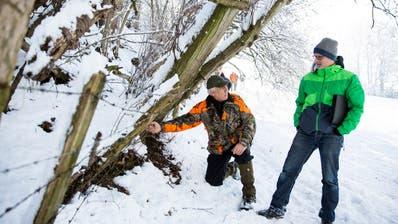 Peter Weigelt (links), Präsident Revier Jagd St.Gallen, zeigt Lukas Indermauer (rechts) Geschäftsführer WWF St.Gallen, einen für Wildtiere gefährlichen Stacheldrahtzaun. (Bild: Mareycke Frehner)