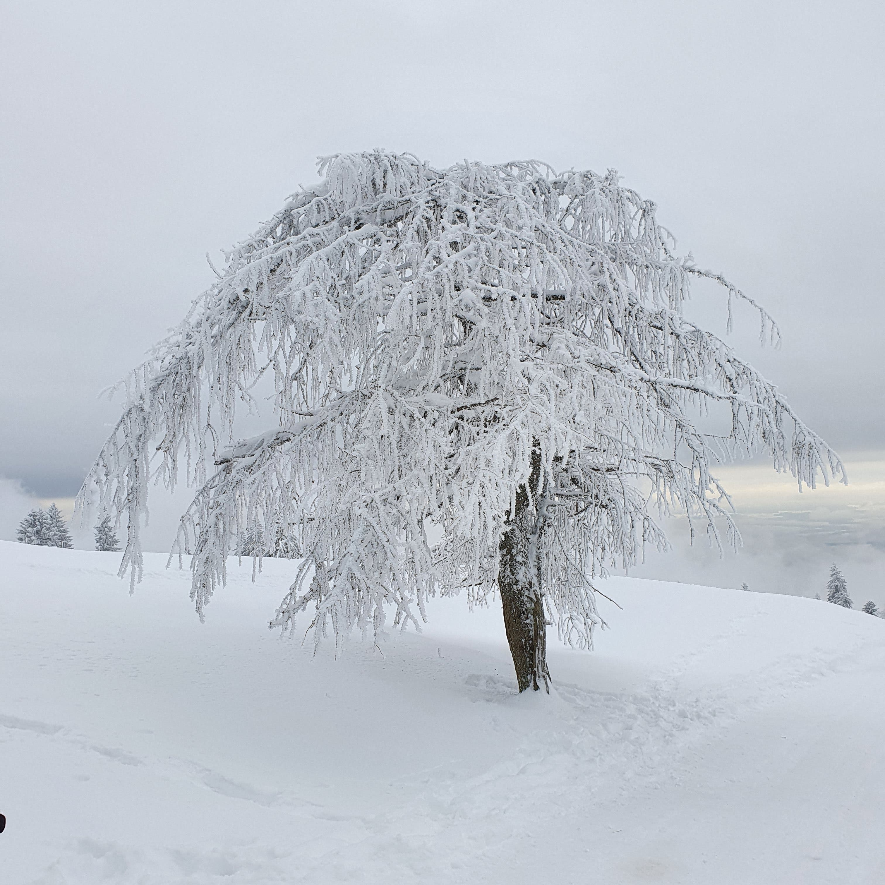 undefined Winterwonderland