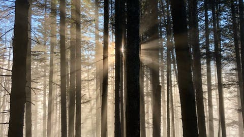 Mystische Stimmung an der Nebelgrenze. (Symbolbild: Leserin Sandra Waldispühl (Eigenthal, 28. November 2020))