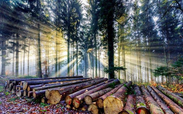Schweizer Holz liegt ungenutzt in den Wäldern und verfault – dabei könnte es die Klimabilanz deutlich verbessern