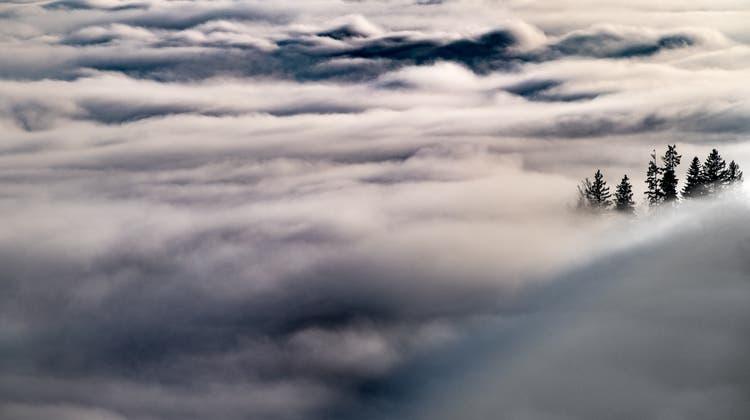 Oberhalb von Altstätten schälen sich Bäume aus dem Nebel. (Bild: Benjamin Manser (25. November 2019))