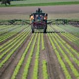 Sollen Pestizide in der Landwirtschaft verboten werden? Das ist eine der Fragen, über die das Stimmvolk im Juni entscheiden muss. (Symbolbild) (Keystone)