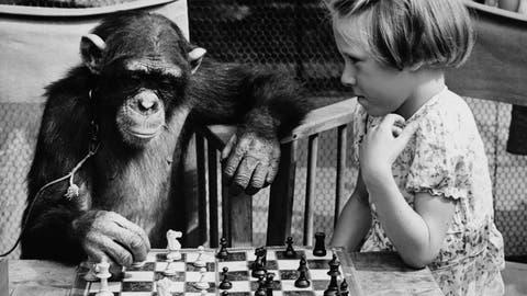 US-Kultschriftsteller T.C.Boyle wird in seinem neuen Roman zum virtuosen Schimpansen-Versteher