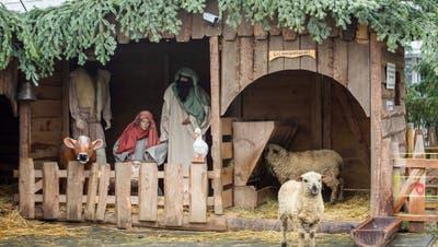 Besondere Attraktion: In dieser Krippe wohnen Schafe