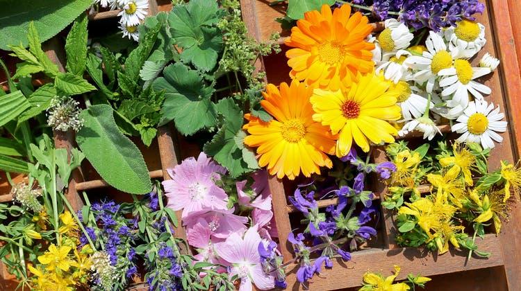 Sie lieben die Sonne und brauchen kaum Wasser: Fünf Pflanzen, die perfekt sind für die Sommerhitze