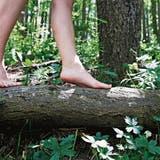 Auf nackten Sohlen durch den Wald: Das Baugesuch für den Barfusspfad