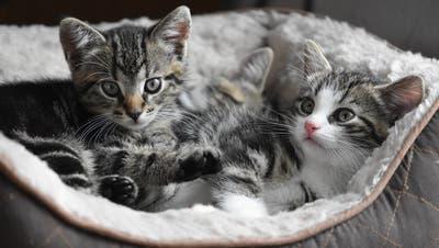 10spannende Fakten über Katzen, die Sie überraschen werden