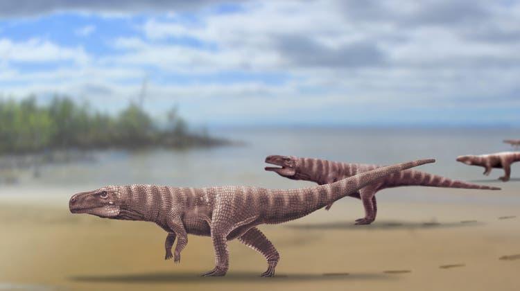 Versuchten es die Krokodile auch mal mit dem aufrechten Gang?