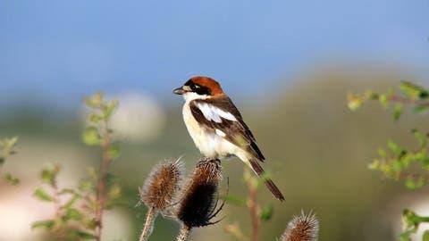 Ihnen schadet die Abnahme der Biodiversität am meisten: Vögel werden immer seltener